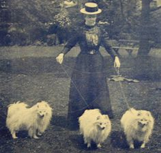 The White Pomeranian or Spitz - a century of persecution