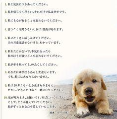 犬と私の10の約束|1.私と気長につきあってください。|2.私を信じてください。それだけで私は幸せです。|3.私にも心があることを忘れないでください。|4.言うことを聞かないときは、理由があります。|5.私にたくさん話しかけてください。人の言葉は話せないけど、わかっています。|6.私をたたかないで。本気になったら私のほうが強いことを忘れないでください。|7.私が年を取っても、仲良くしてください。|8.あなたには学校もあるし友達もいます。でも、私にはあなたしかいません。|9.私は10年くらいしか生きられません。だから、できるだけ私と一緒にいてください。|10.私が死ぬとき、お願いです。そばにいてください。そして、どうか覚えていてください。私がずっとあなたを愛していたことを。|(原典:犬の10戒)