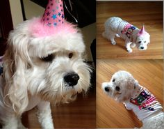 1000 Images About Dog Birthday Party On Pinterest Dog