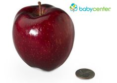 15 weeks: Your baby has grown to the size of an apple and weighs about 2 1/2 ounces. (Length: 4 inches, head to bottom.) @babycenter #pregnancy #howbigisyourbaby