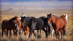 """""""Something about the wild horses of Sand Wash Basin, Colorado captures the imagination"""""""