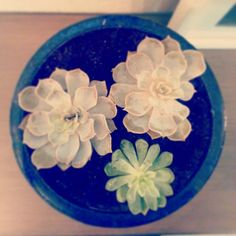 Replanting succulents from a wedding bouquet. #Succulents