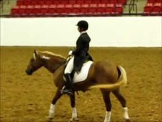 Extreme Mustang Makeover -Splash 5yo Mustang mare 100 days out of wild 2011