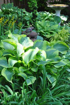 Three Dogs in a Garden: A Shade Garden in Oakville, Ontario Shade Garden, Garden Plants, Japanese Painted Fern, Hydrangea Quercifolia, Oakville Ontario, Hosta Gardens, Garden Deco, Heuchera, Foliage Plants