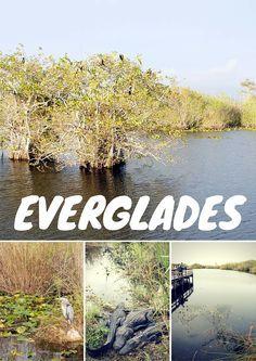 Visiter le parc des Everglades : les pieds dans l'eau et au bord des marécages. Un environnement unique et protégé en Floride.