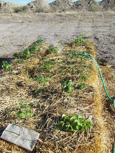 straw bale gardening water usage