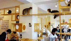 """Taiwan-based hangout continues the trend that has been popping up throughout China and Japan. Sometimes referred to as Neko cafés (neko meaning """"cat"""" in Japanese), the cat-tastic, caffeinated hubs offer city residents a place to enjoy feline companionship"""