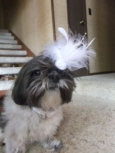 White Wedding Dog Hair Bow Fascinator by KOCouture on Etsy