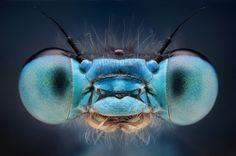 macro monsters, insecten maken