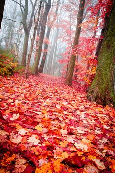 """♂ Red trees """"Forest Floor"""" by Adam Bender"""