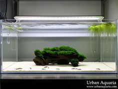 Such a cool modern aquarium! Sand Cats by Urban Aquaria Great Fissidens. More information in their personal site here.
