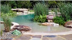 Natural Pool/Ponds