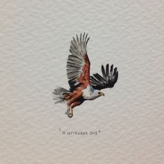 Day 260 : For my dad the rockstar, who once told me that when life gets a little overwhelming, I should just pretend that I'm an eagle, calmly soaring over and observing everything far below. It always makes me feel better. Happy birthday Dadi. 24 x 30 mm. #365paintingsforants #miniature #watercolor #african #fish #eagle