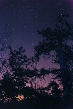 L<3ve starry nights. Nothing better than layin on a truck bed and just having heart to hearts under the stars