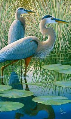 Beautiful. .Blue Heron - 溫寶麗 - Google+