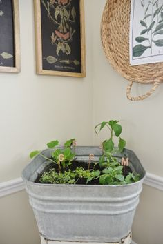 DIY wash tub herb garden - A great way to have a small herb garden ...