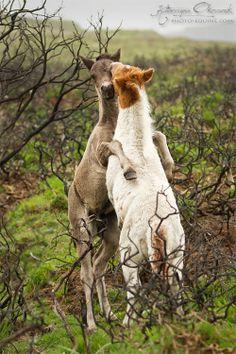 ☀Foals from Dartmoor National Park by Katarzyna  Okrzesik on 500px*