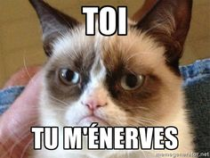 Angry Cat Meme via Meme Generator