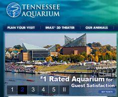 Aquarium, Tennessee and The ojays on Pinterest