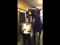 Happy Birthday JD! This Horse's Reaction To The Birthday Song Is Hilarious!