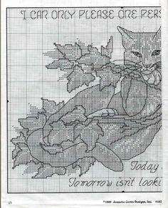 cattitudes eighth litter 15/19
