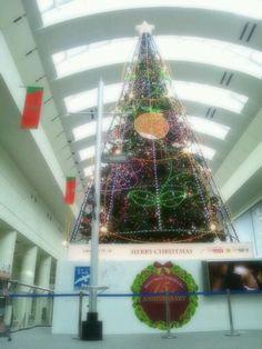 2012年クイーンズスクエアのクリスマスツリー。 左下にはプロデュースしたゆずのサインも。