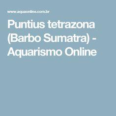 Puntius tetrazona - Aquarismo Online - Barbo Sumatra