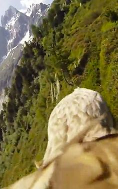"Insane. ""Some Hero Strapped a GoPro Camera Onto An Eagle And The Footage Is Breathtaking"" 