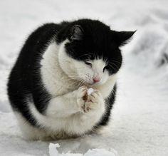 猫の散歩 : 画像