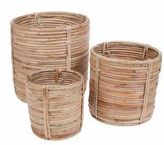 Pot Bamboo