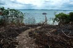 """As obrigações que foram repassadas de licença em licença, diante da incapacidade da empresa e do próprio governo em cumprir as condições de viabilidade e instalação da usina, são dívidas acumuladas do processo de licenciamento de Belo Monte e, com a aprovação da LO, ganharam o status de """"adiadas indefinidamente""""."""