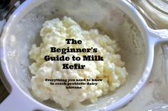 Learn to care for kefir grains, kombucha SCOBYs and other cultures while you're away. Probiotic Foods, Fermented Foods, Kefir Recipes, Raw Food Recipes, Kombucha, Kefir Yogurt, Kefir Milk, Kefir Culture, Kefir How To Make