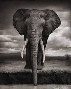 national geographic: mighty but gentle elephant