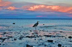 I love sunsets and birds  Photo by Jess C. -- National Geographic Your Shot