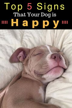 Uplifting So You Want A American Pit Bull Terrier Ideas. Fabulous So You Want A American Pit Bull Terrier Ideas. Baby Animals, Funny Animals, Cute Animals, Animal Memes, Pitbull Terrier, Dogs Pitbull, Smiling Pitbull, Pitbull Red Nose, Red Nose Pit
