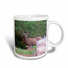 Jos Fauxtographee- Deer - A deer in Pine Valley in a neighborhood staring out from a rock - Mug Pine Valley, Deer, The Neighbourhood, Mugs, Rock, Amazon, Tableware, The Neighborhood, Dinnerware