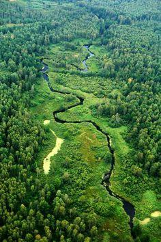 Река Свольна течет по самым диким местам заказника «Красный бор». Беларусь