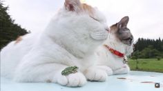 Chill Kitty Isn't Bothered By The Real-Life Frog Resting On His Paw