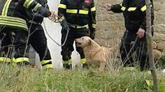 Cane intrappolato da giorni nel laccio da bracconieri, lo salvano i pompieri :http://www.qualazampa.news/2017/03/02/cane-intrappolato-da-giorni-nel-laccio-da-bracconieri-lo-salvano-i-pompieri/