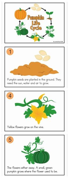 Life Cycle Stages, Pumpkin Life Cycle, Cut And Paste Worksheets, Green Pumpkin, Vocabulary Activities, Easy Science, English Class, Life Cycles, Autumn Home