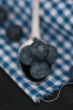 Heidelbeeren; blue berries photo by Cornelia Kahr