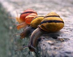 snails.png 496 × 390 pixels