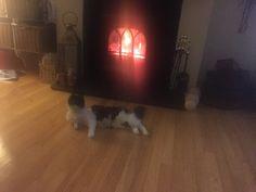 Daisy keeping warm