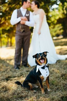 Oh he is a happy boy! Look at that smile!  Luci & Josh's relaxing backyard wedding