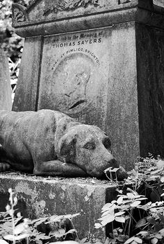 """The tombstone of English boxer Thomas Sayers. The dog represents his pet, """"Lion"""".  [via Flickr]"""