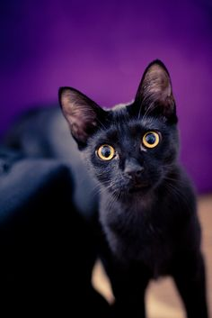 """""""I always get a shiver when I see cats seeing something that I can't see."""" --Eleanor Farjeon"""