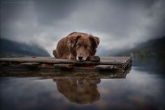 woman creates enchanting portraits of dogs in the austrian wilderness 19