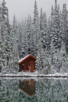 Rustic tiny cabin in the snowy woods. Take me here. Photo by Lee Rentz. -Wit & Delight. Photo only.