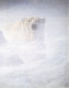 Robert Bateman - Polar Bear