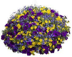 Google Image Result for http://www.schaeferwholesaleplantgrower.com/assets/images/2012/hanging-basket-top.jpg